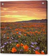 High Desert Sunset Serenade Acrylic Print
