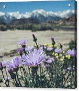 High Desert Wildflowers Acrylic Print