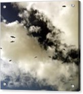 High Flight Acrylic Print