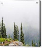High Forest On Mt. Rainier Acrylic Print