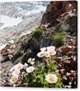 High Mountain Flowers Acrylic Print