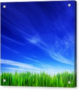 High Resolution Image Of Fresh Green Grass And Blue Sky Acrylic Print