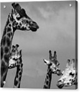 High Rise Chat Acrylic Print