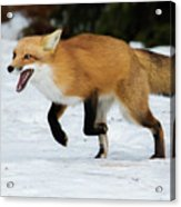 High Speed Fox Acrylic Print