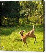 High Tailing It Acrylic Print