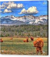 Highland Colorado Acrylic Print
