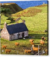 Highland Cottage With Highland Cattle Acrylic Print