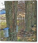 Highland County Va Virginia - Monterey - Mcdowell - Maple Harvest Acrylic Print