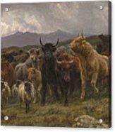 Highland Raid Acrylic Print
