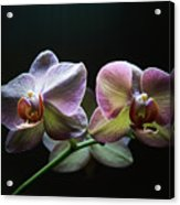 Highlighted Orchids Acrylic Print