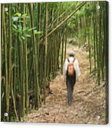 Hiker In Bamboo Forest Acrylic Print