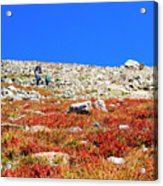Hikers And Autumn Tundra On Mount Yale Colorado Acrylic Print