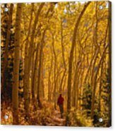 Hiking In Fall Aspens Acrylic Print