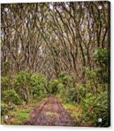 Hiking On Rangitoto New Zealand Acrylic Print