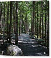 Hiking Trail At Brandywine Falls Provincial Park Acrylic Print