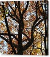 Hiking Trail Fall 2017 8 Acrylic Print