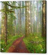Hiking Trail In Washington State Park Acrylic Print