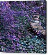 Hiking Trail Infrared Acrylic Print