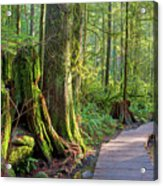 Hiking Trail Through Forest In Lynn Canyon Park Acrylic Print