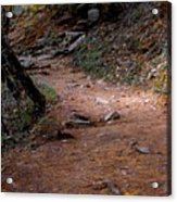 Hiking Trail To Abrams Falls Acrylic Print by DigiArt Diaries by Vicky B Fuller