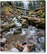 Hiking Zen Forests Acrylic Print