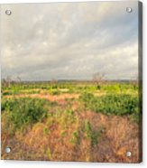 Hill Country Memories Acrylic Print