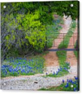 Hill Country Road Acrylic Print
