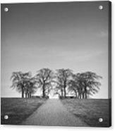 Hill Of Elm Acrylic Print