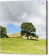 Hills Of Sedbergh Cumbria Acrylic Print