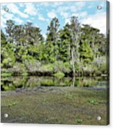 Hillsborough River 1 Acrylic Print