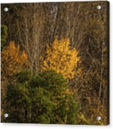 Hillside Autumn Acrylic Print