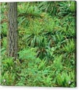Hillside Ferns Acrylic Print