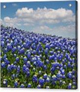 Hillside Texas Bluebonnets Acrylic Print