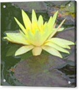 Hilo Water Lily 4 Acrylic Print