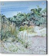 Hilton Head Beach Fauna Acrylic Print