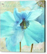 Himalayan Blue Poppy Acrylic Print