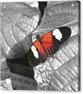 Hint Of Color Acrylic Print