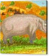 Hippo In The Savanna Acrylic Print