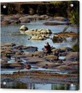Hippo Raft Acrylic Print