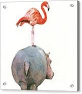 Hippo with flamingo Acrylic Print