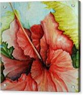 Hiroko's Hibiscus 2 Acrylic Print