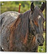 His Name Is Seven Acrylic Print