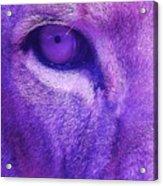 His Royal Eyeness Acrylic Print