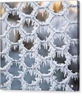 Hoar Frost Acrylic Print