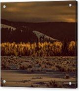 Hoar Frost In Dawn's Light Acrylic Print