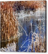 Hoar Frost On Reeds Acrylic Print