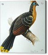 Hoatzin Acrylic Print