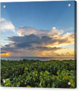 Hobe Sound Beach Sunrise Acrylic Print