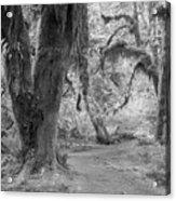 Hoh Rain Forest 3378 Acrylic Print