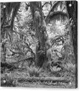 Hoh Rain Forest 3381 Acrylic Print